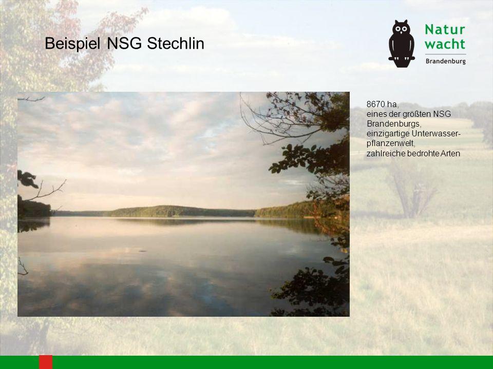 Beispiel NSG Stechlin - Befahren mit durch Muskelkraft getriebene Boote, auf dem Stechlinsee auch mit Segelbooten + Anzahl der Boote ist für jeden See festgelegt + Boote liegen an festgelegten Liegeplätzen, i.d.R.