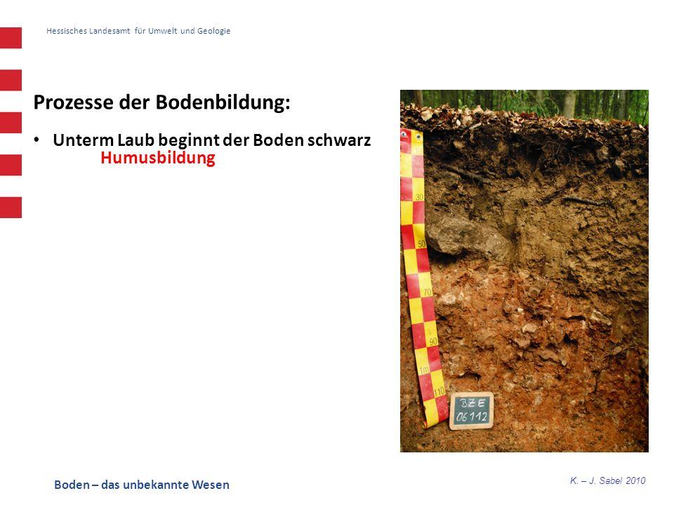 K. – J. Sabel 2010 Hessisches Landesamt für Umwelt und Geologie Prozesse der Bodenbildung: Unterm Laub beginnt der Boden schwarz Humusbildung Boden –