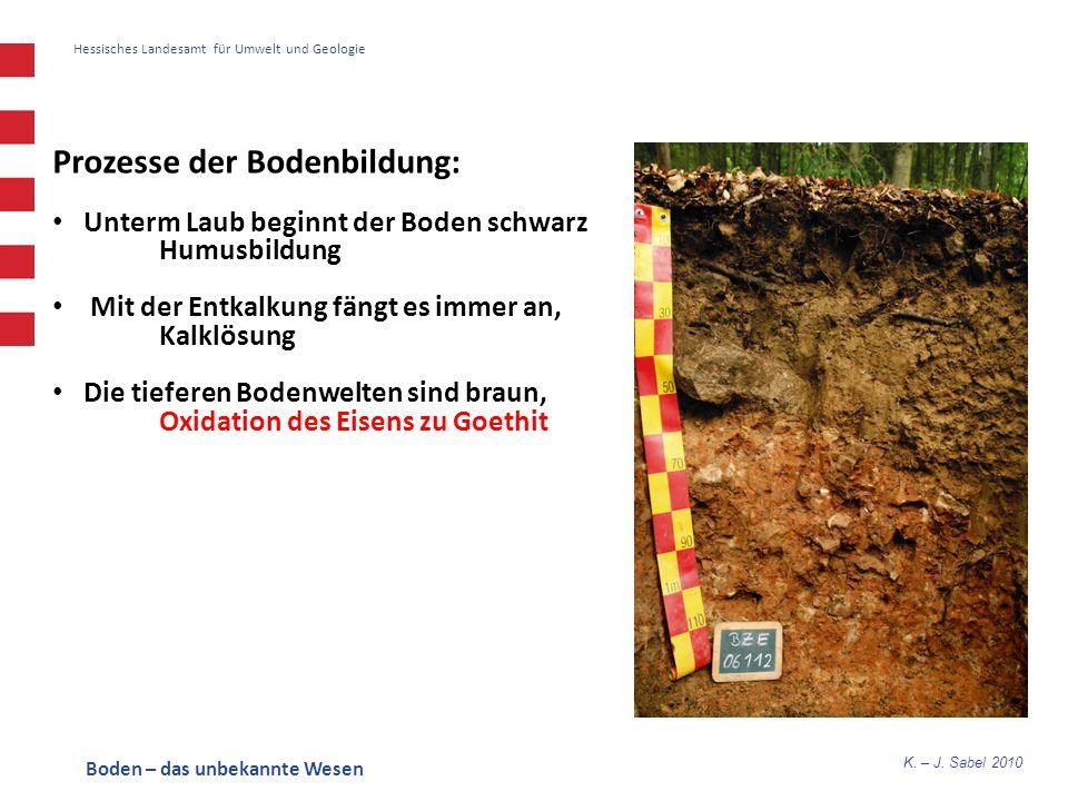K. – J. Sabel 2010 Hessisches Landesamt für Umwelt und Geologie Prozesse der Bodenbildung: Unterm Laub beginnt der Boden schwarz Humusbildung Mit der