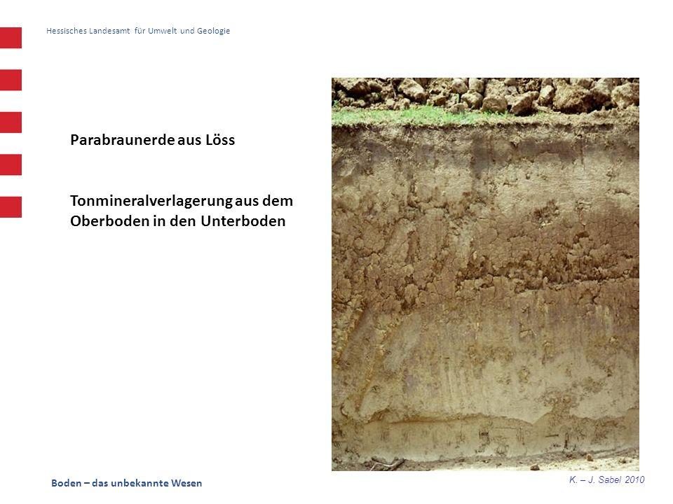 K. – J. Sabel 2010 Boden – das unbekannte Wesen Hessisches Landesamt für Umwelt und Geologie Parabraunerde aus Löss Tonmineralverlagerung aus dem Ober