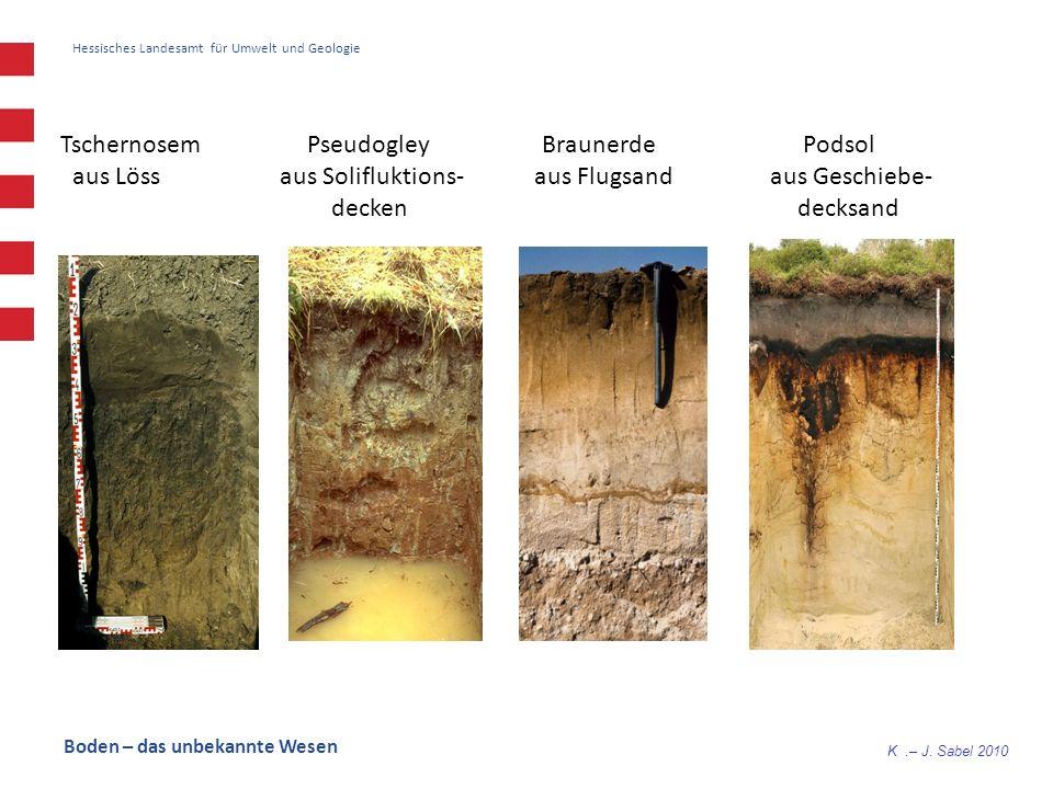K.– J. Sabel 2010 Hessisches Landesamt für Umwelt und Geologie Tschernosem Pseudogley Braunerde Podsol aus Löss aus Solifluktions- aus Flugsand aus Ge
