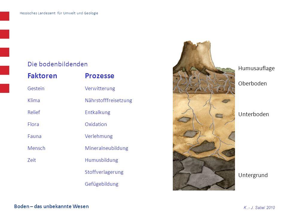 K.- J. Sabel 2010 Hessisches Landesamt für Umwelt und Geologie Die bodenbildenden Faktoren Prozesse GesteinVerwitterung KlimaNährstofffreisetzung Reli