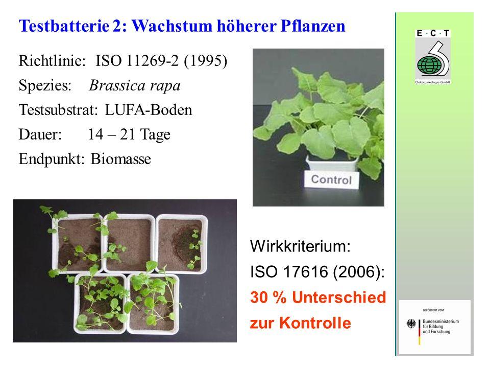 Testbatterie 2: Wachstum höherer Pflanzen Richtlinie: ISO 11269-2 (1995) Spezies: Brassica rapa Testsubstrat: LUFA-Boden Dauer: 14 – 21 Tage Endpunkt: