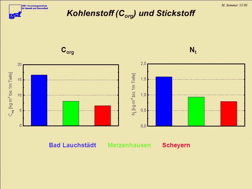 M. Sommer 11/01 Kohlenstoff (C org ) und Stickstoff Bad LauchstädtMerzenhausenScheyern C org NtNt