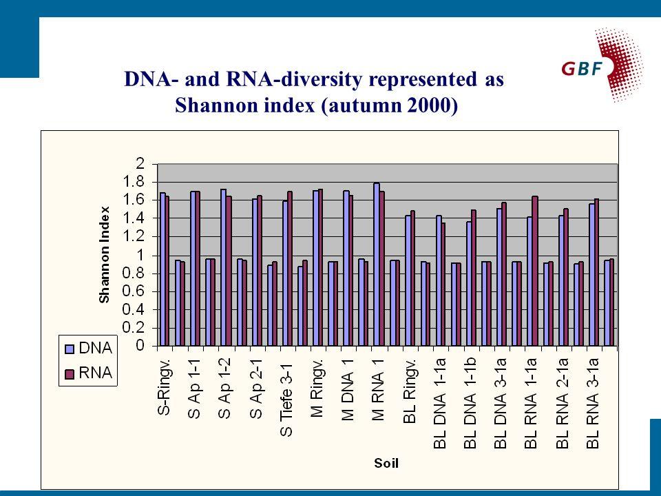 Cluster analysis of DNA/RNA SSCP fingerprints (autumn 2000)
