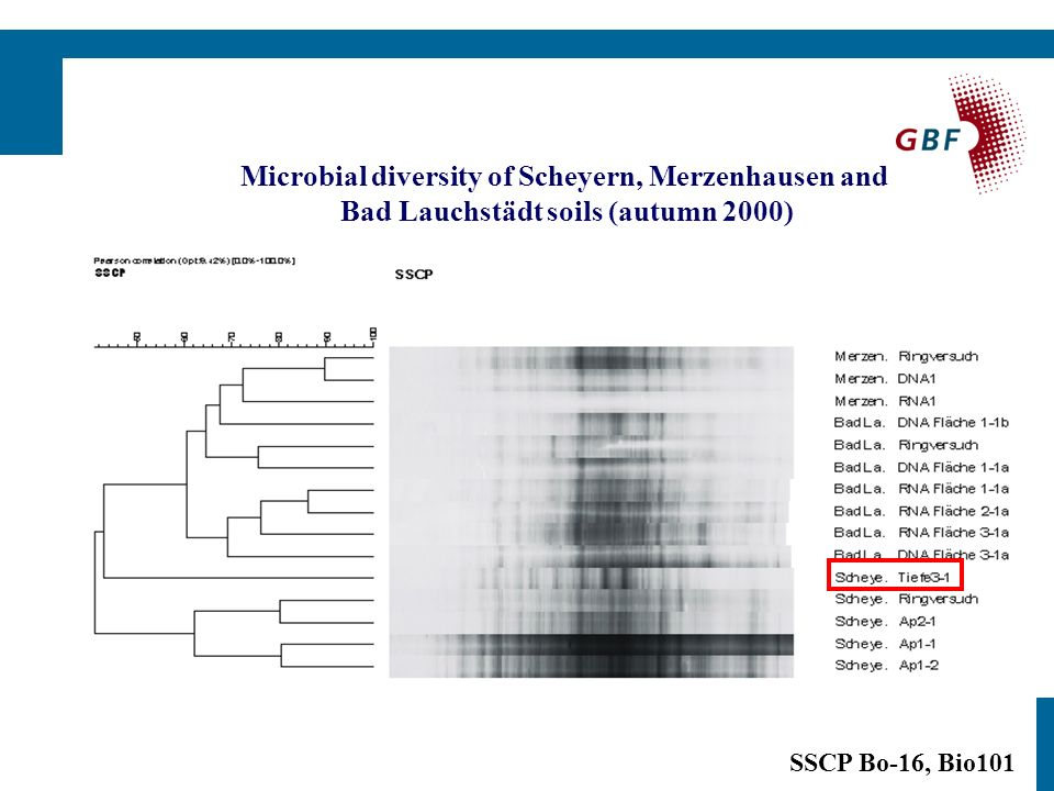 SSCP Bo-16, Bio101 Microbial diversity of Scheyern, Merzenhausen and Bad Lauchstädt soils (autumn 2000)