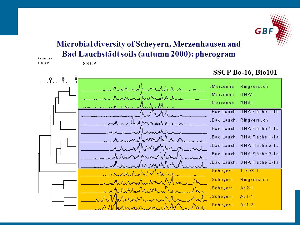 SSCP Bo-16, Bio101 Microbial diversity of Scheyern, Merzenhausen and Bad Lauchstädt soils (autumn 2000): pherogram