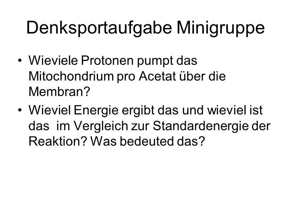 Denksportaufgabe Minigruppe Wieviele Protonen pumpt das Mitochondrium pro Acetat über die Membran.