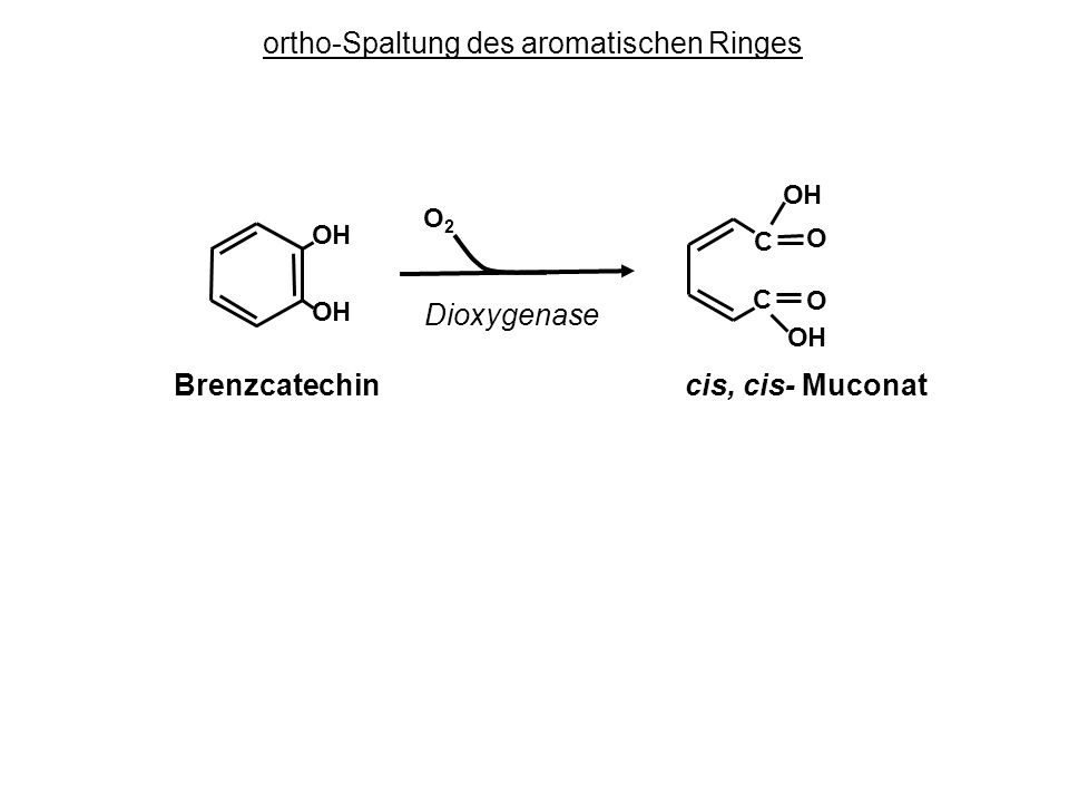 O O OH OH C C OH OH O2O2 Dioxygenase Brenzcatechin cis, cis- Muconat ortho-Spaltung des aromatischen Ringes