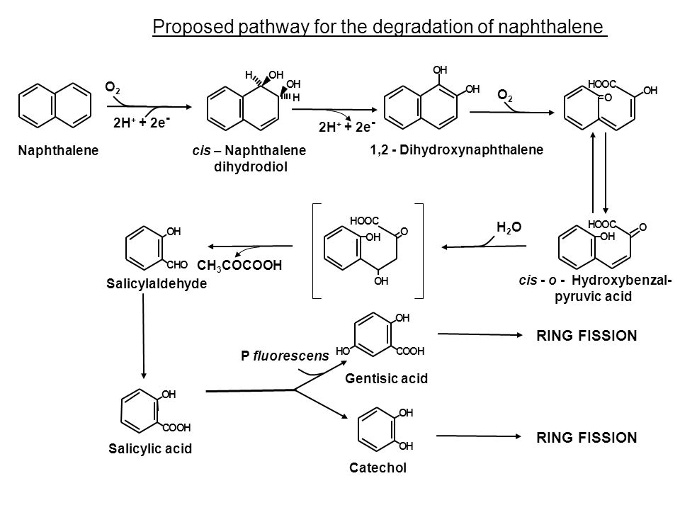 Proposed pathway for the degradation of naphthalene H OH OH H HO OH O COOH OH OH HOOC O OH O OH OH CHO OH COOH OH COOHOH OH OH O2O2 2H + + 2e - O2O2 H