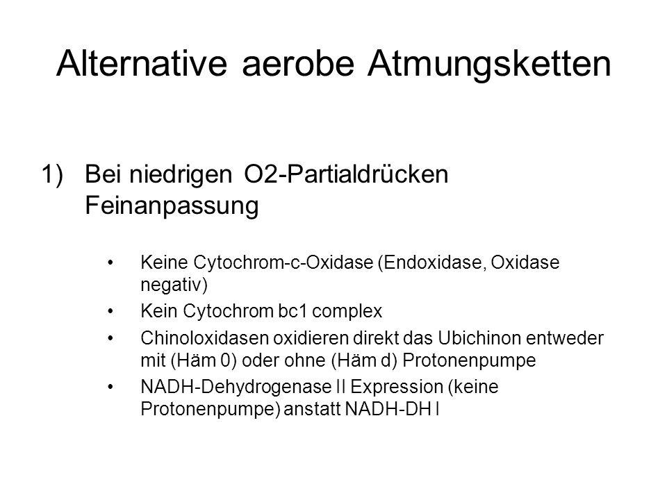 Alternative aerobe Atmungsketten 1)Bei niedrigen O2-Partialdrücken Feinanpassung Keine Cytochrom-c-Oxidase (Endoxidase, Oxidase negativ) Kein Cytochrom bc1 complex Chinoloxidasen oxidieren direkt das Ubichinon entweder mit (Häm 0) oder ohne (Häm d) Protonenpumpe NADH-Dehydrogenase II Expression (keine Protonenpumpe) anstatt NADH-DH I