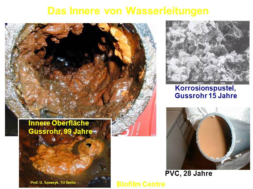 Das Innere von Wasserleitungen Korrosionspustel, Gussrohr 15 Jahre PVC, 28 Jahre Prof. U. Szewzyk, TU Berlin Innere Oberfläche Gussrohr, 99 Jahre Biof