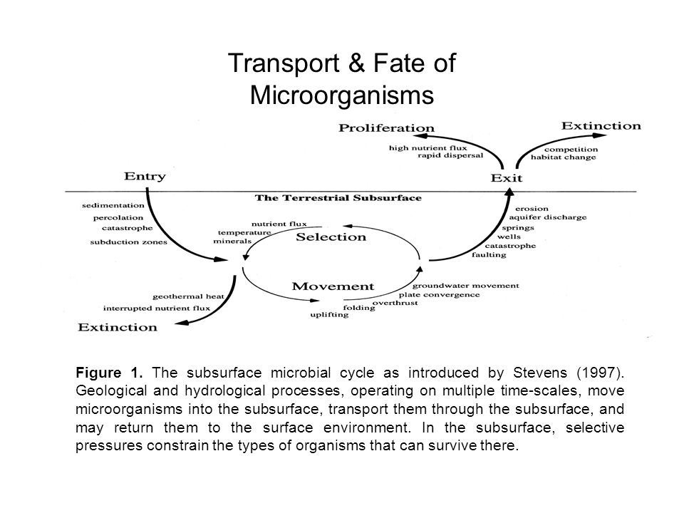 Figure 1. The subsurface microbial cycle as introduced by Stevens (1997). Geological and hydrological processes, operating on multiple time-scales, mo
