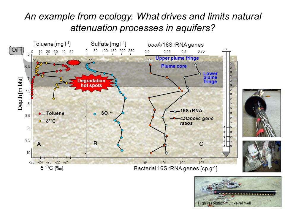 An example from ecology. What drives and limits natural attenuation processes in aquifers? High resolution multi-level well Depth [m bls] A Toluene [m