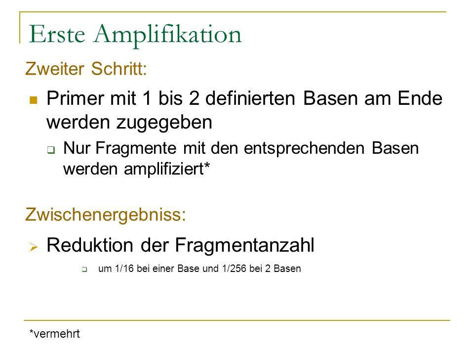 Erste Amplifikation Primer mit 1 bis 2 definierten Basen am Ende werden zugegeben Nur Fragmente mit den entsprechenden Basen werden amplifiziert* Redu