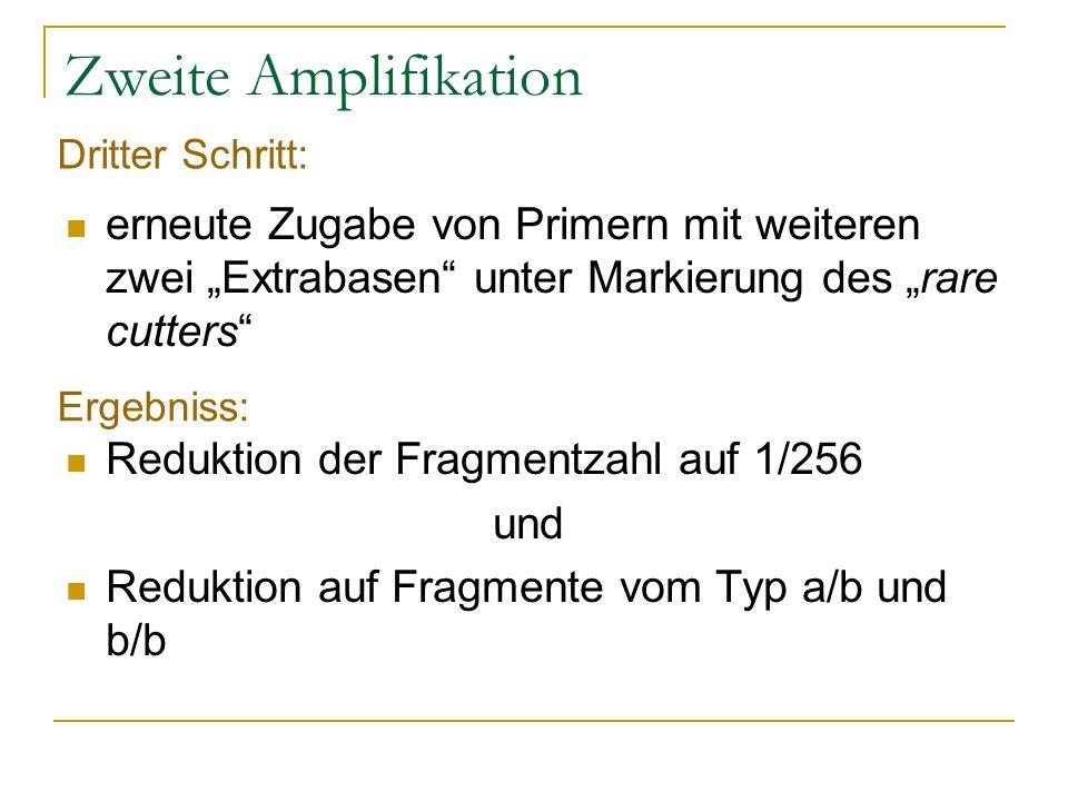 Zweite Amplifikation erneute Zugabe von Primern mit weiteren zwei Extrabasen unter Markierung des rare cutters Reduktion der Fragmentzahl auf 1/256 un