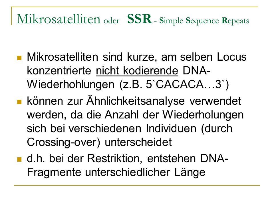 Mikrosatelliten oder SSR - Simple Sequence Repeats Mikrosatelliten sind kurze, am selben Locus konzentrierte nicht kodierende DNA- Wiederhohlungen (z.