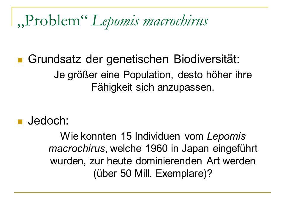 Problem Lepomis macrochirus Grundsatz der genetischen Biodiversität: Je größer eine Population, desto höher ihre Fähigkeit sich anzupassen. Jedoch: Wi