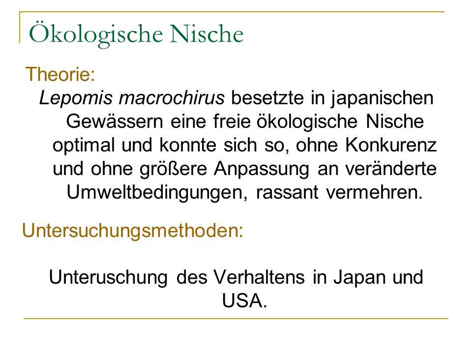 Ökologische Nische Lepomis macrochirus besetzte in japanischen Gewässern eine freie ökologische Nische optimal und konnte sich so, ohne Konkurenz und