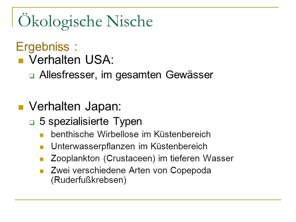 Ökologische Nische Verhalten USA: Allesfresser, im gesamten Gewässer Verhalten Japan: 5 spezialisierte Typen benthische Wirbellose im Küstenbereich Un