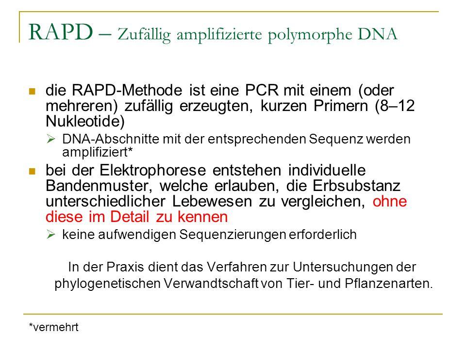 RFLPs - Restriktionsfragmentlängenpolymorphismus Untersuchung der Entstehung und des Verlustes von Restriktionsstellen durch Mutation zu untersuchender Genabschnitt wird mit Restriktionsenzym verdaut Ähnlichkeit kann durch die Entstehung von gleichen oder ungleichen Fragmentlängen bei der Elektrophorese (direkt) abgelesen werden