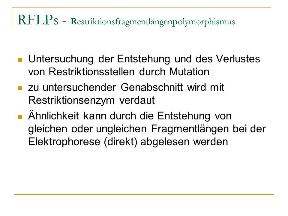 RFLPs - Restriktionsfragmentlängenpolymorphismus Untersuchung der Entstehung und des Verlustes von Restriktionsstellen durch Mutation zu untersuchende