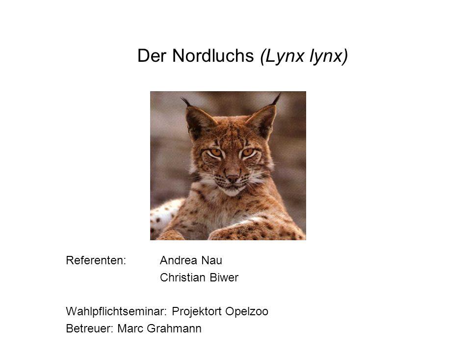 Sachanalyse Systematik: –Klasse:Mammalia (Säugetiere) –Ordnung:Carnivora (Raubtiere) –Ü-Familie: Feloidea (Katzenartige) –Familie: Felidea (Katzen) –U-Familie:Pantherinae (Großkatzen) –Gattung:Lynx (Luchs) –Art:Lynx lynx (Nordluchs)