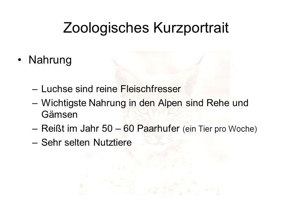 Zoologisches Kurzportrait Nahrung –Luchse sind reine Fleischfresser –Wichtigste Nahrung in den Alpen sind Rehe und Gämsen –Reißt im Jahr 50 – 60 Paarh
