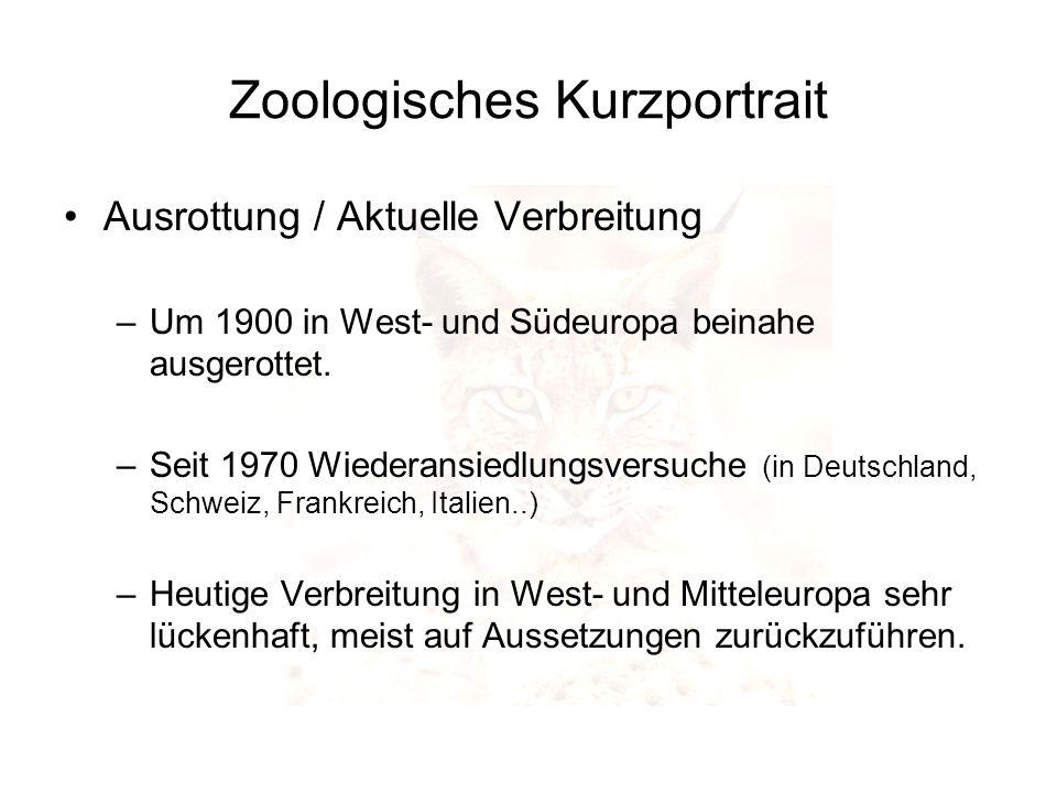 Zoologisches Kurzportrait Ausrottung / Aktuelle Verbreitung –Um 1900 in West- und Südeuropa beinahe ausgerottet. –Seit 1970 Wiederansiedlungsversuche