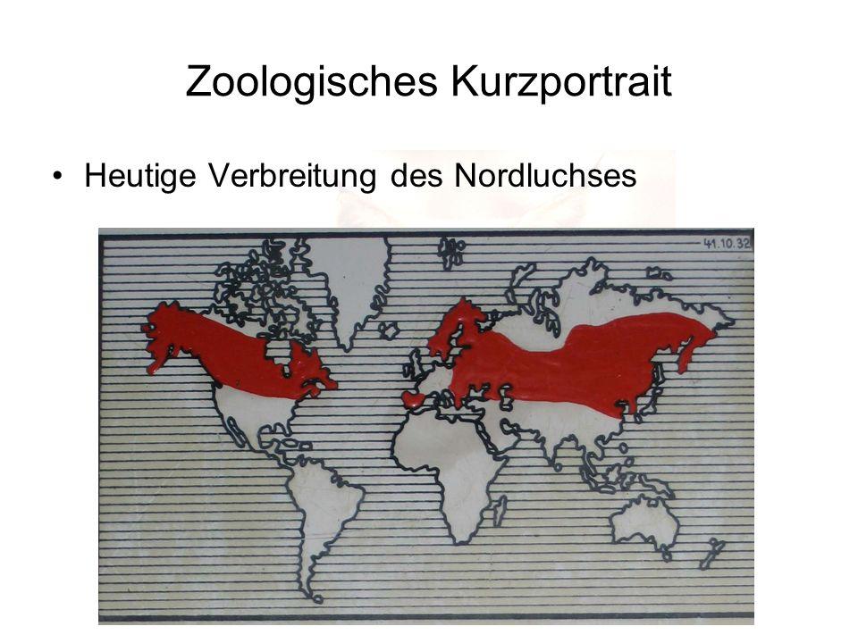 Zoologisches Kurzportrait Heutige Verbreitung des Nordluchses