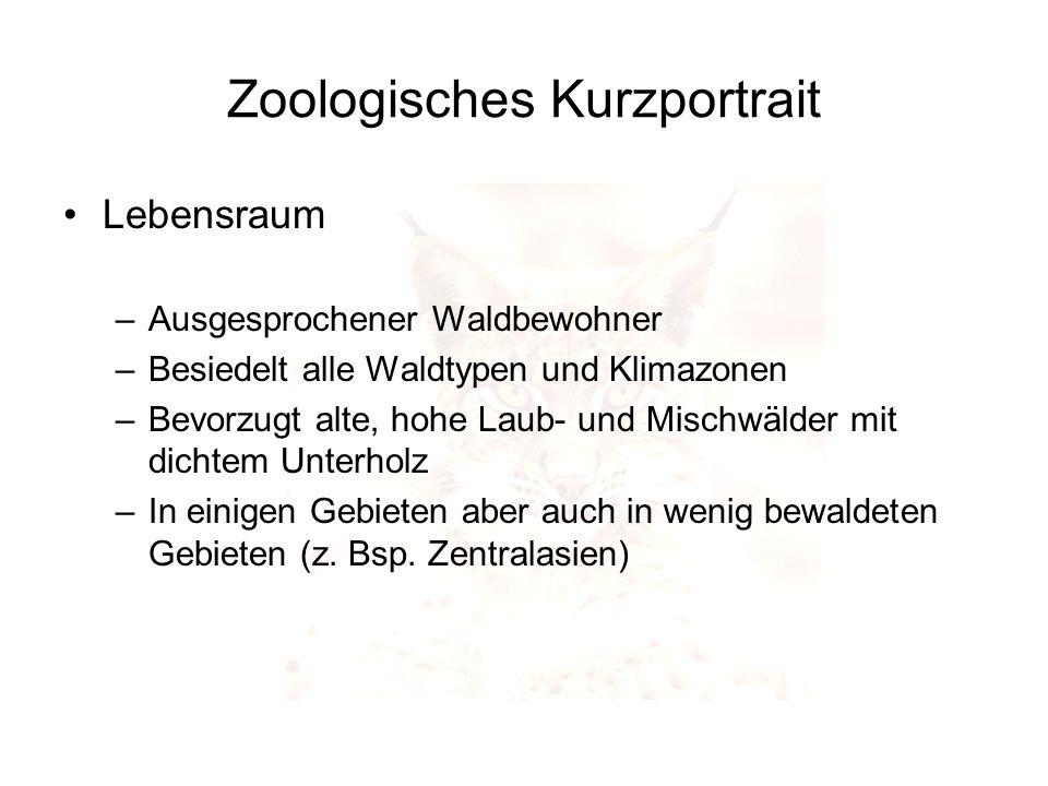 Zoologisches Kurzportrait Lebensraum –Ausgesprochener Waldbewohner –Besiedelt alle Waldtypen und Klimazonen –Bevorzugt alte, hohe Laub- und Mischwälde