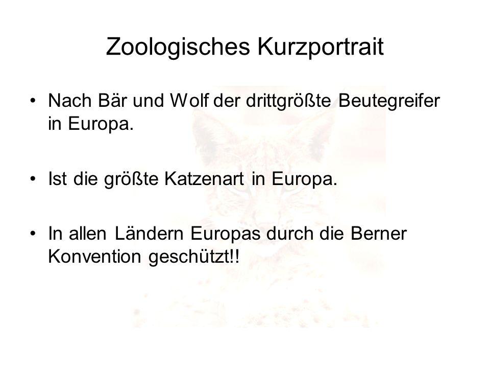 Zoologisches Kurzportrait Nach Bär und Wolf der drittgrößte Beutegreifer in Europa. Ist die größte Katzenart in Europa. In allen Ländern Europas durch