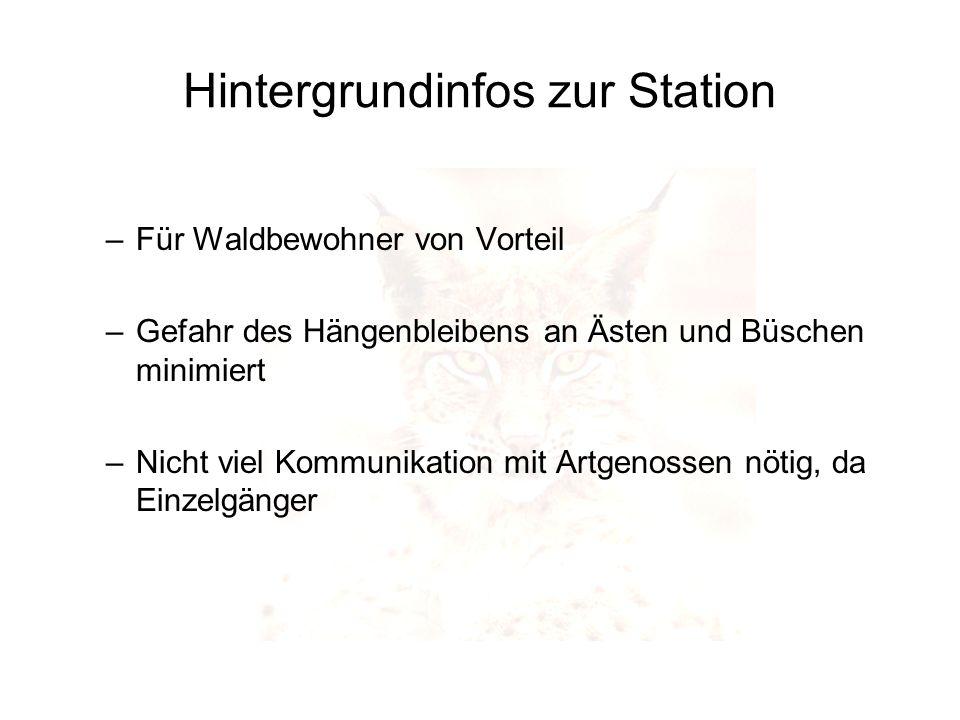 Hintergrundinfos zur Station –Für Waldbewohner von Vorteil –Gefahr des Hängenbleibens an Ästen und Büschen minimiert –Nicht viel Kommunikation mit Art