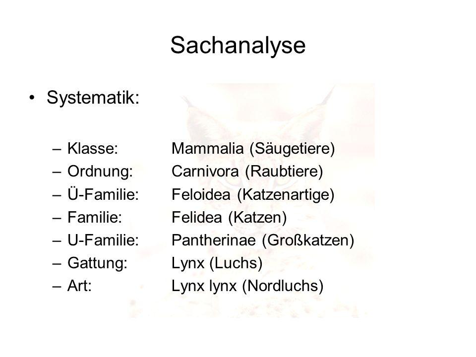 Sachanalyse Systematik: –Klasse:Mammalia (Säugetiere) –Ordnung:Carnivora (Raubtiere) –Ü-Familie: Feloidea (Katzenartige) –Familie: Felidea (Katzen) –U