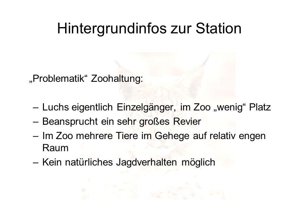 Hintergrundinfos zur Station Problematik Zoohaltung: –Luchs eigentlich Einzelgänger, im Zoo wenig Platz –Beansprucht ein sehr großes Revier –Im Zoo me