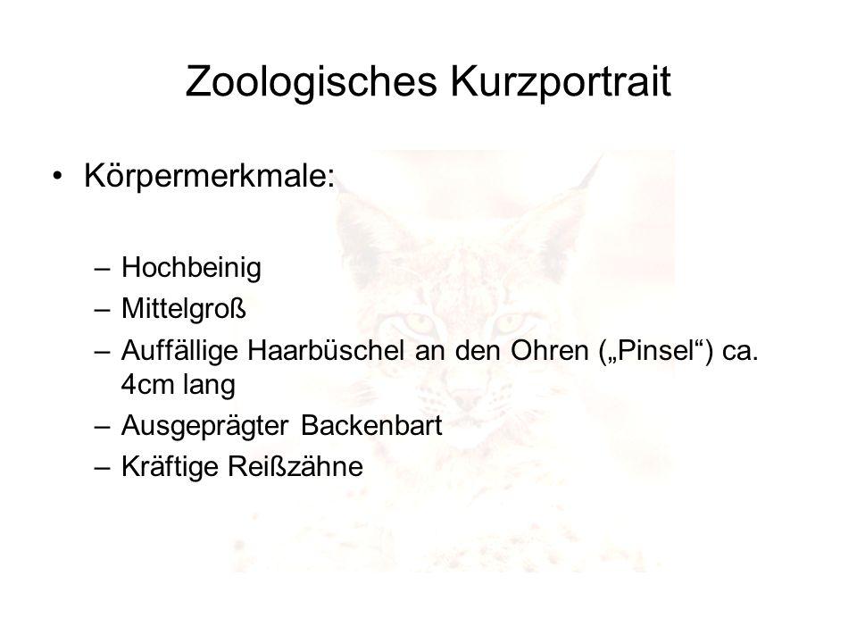 Zoologisches Kurzportrait Körpermerkmale: –Hochbeinig –Mittelgroß –Auffällige Haarbüschel an den Ohren (Pinsel) ca. 4cm lang –Ausgeprägter Backenbart