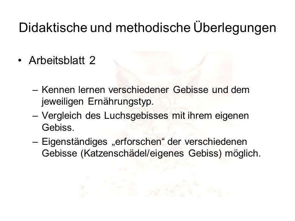 Didaktische und methodische Überlegungen Arbeitsblatt 2 –Kennen lernen verschiedener Gebisse und dem jeweiligen Ernährungstyp. –Vergleich des Luchsgeb