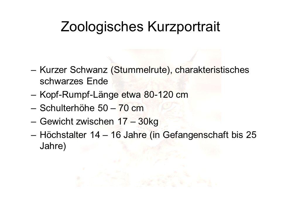 Zoologisches Kurzportrait –Kurzer Schwanz (Stummelrute), charakteristisches schwarzes Ende –Kopf-Rumpf-Länge etwa 80-120 cm –Schulterhöhe 50 – 70 cm –
