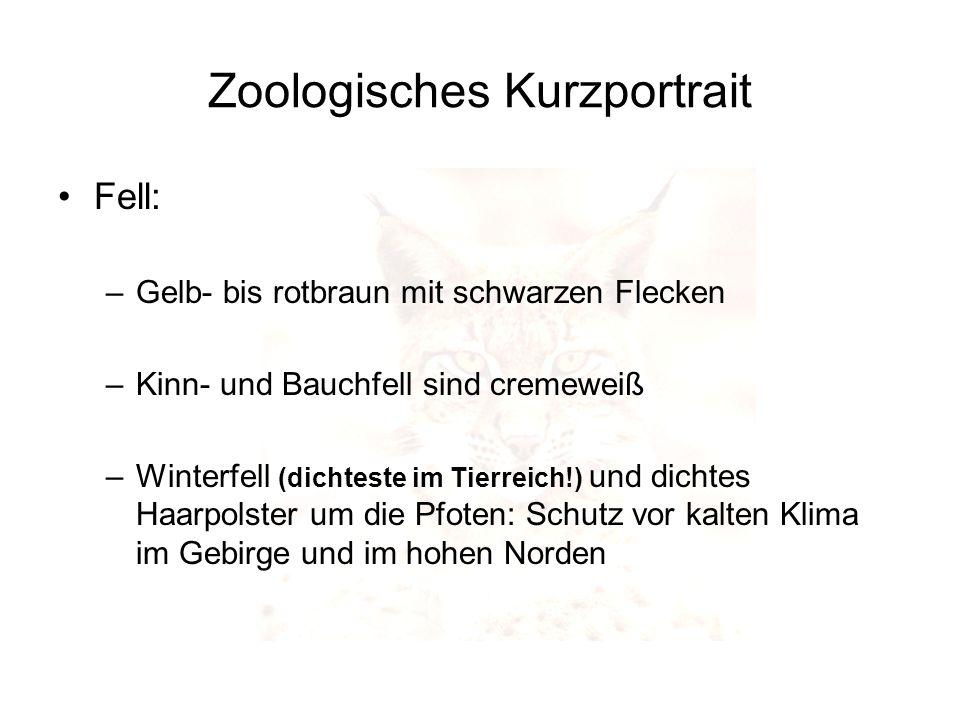 Zoologisches Kurzportrait Fell: –Gelb- bis rotbraun mit schwarzen Flecken –Kinn- und Bauchfell sind cremeweiß –Winterfell (dichteste im Tierreich!) un