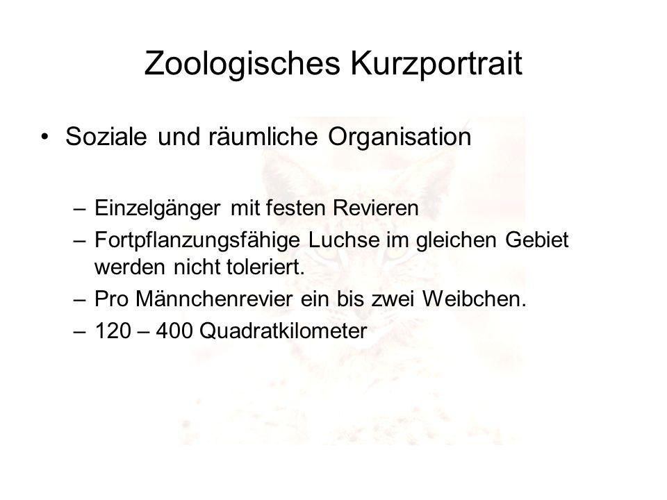 Zoologisches Kurzportrait Soziale und räumliche Organisation –Einzelgänger mit festen Revieren –Fortpflanzungsfähige Luchse im gleichen Gebiet werden