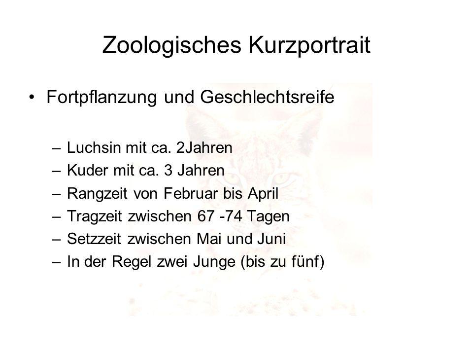 Fortpflanzung und Geschlechtsreife –Luchsin mit ca. 2Jahren –Kuder mit ca. 3 Jahren –Rangzeit von Februar bis April –Tragzeit zwischen 67 -74 Tagen –S