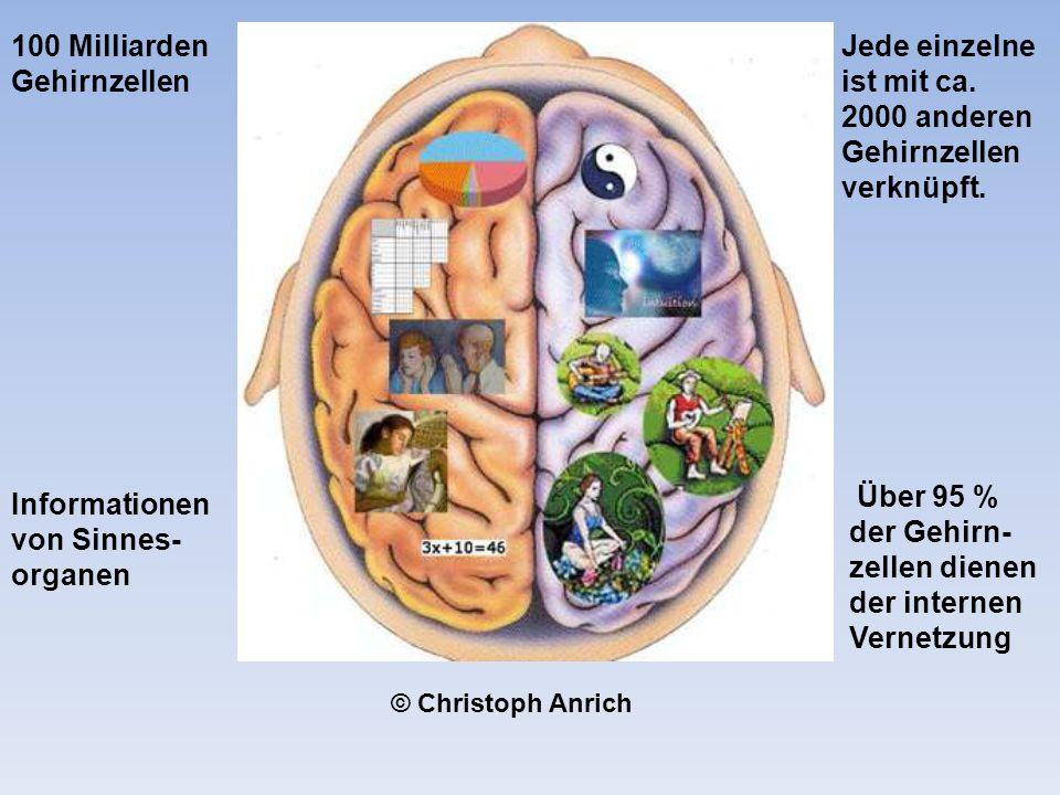 100 Milliarden Gehirnzellen Jede einzelne ist mit ca.