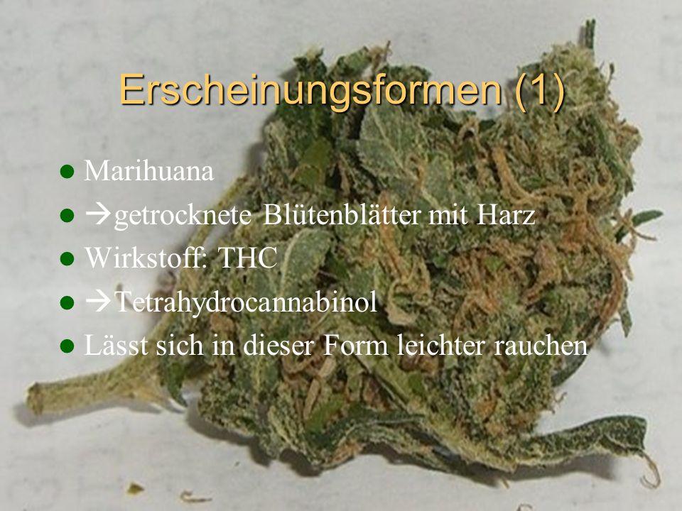 Erscheinungsformen (1) Marihuana getrocknete Blütenblätter mit Harz Wirkstoff: THC Tetrahydrocannabinol Lässt sich in dieser Form leichter rauchen