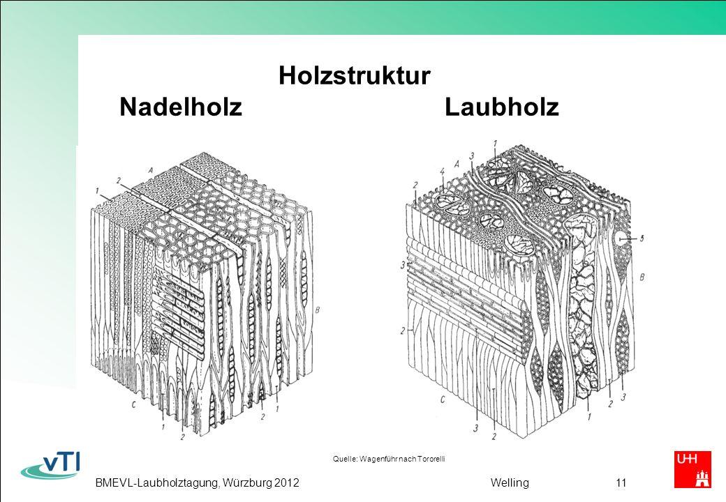 BMEVL-Laubholztagung, Würzburg 2012Welling11 Holzstruktur Nadelholz Laubholz Quelle: Wagenführ nach Tororelli