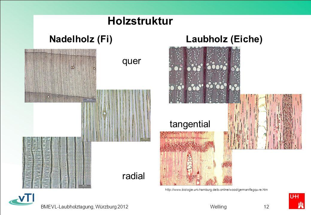 BMEVL-Laubholztagung, Würzburg 2012Welling12 Holzstruktur Nadelholz (Fi) Laubholz (Eiche) quer radial tangential http://www.biologie.uni-hamburg.de/b-online/wood/german/fagqu-re.htm