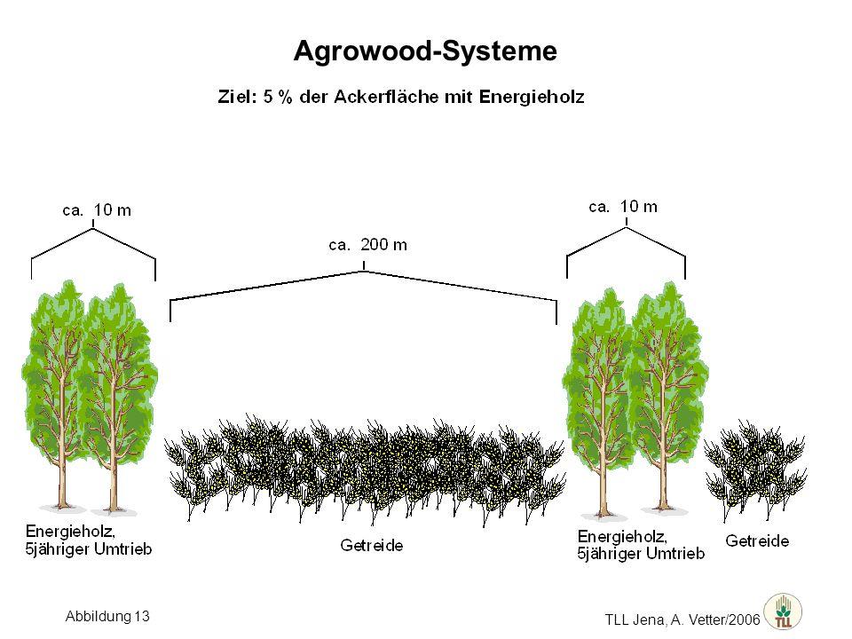 TLL Jena, A. Vetter/2006 Agrowood-Systeme Abbildung 13