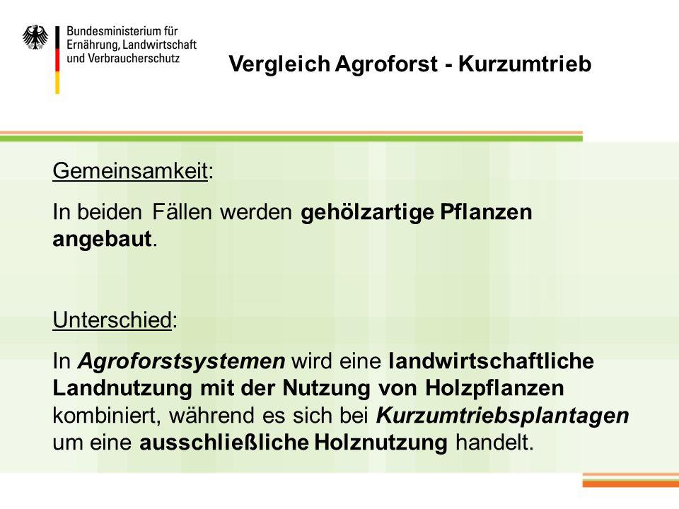 Allgemeine Rahmenbedingungen Holzkonsum nimmt sowohl in Deutschland, wie auch weltweit zu.