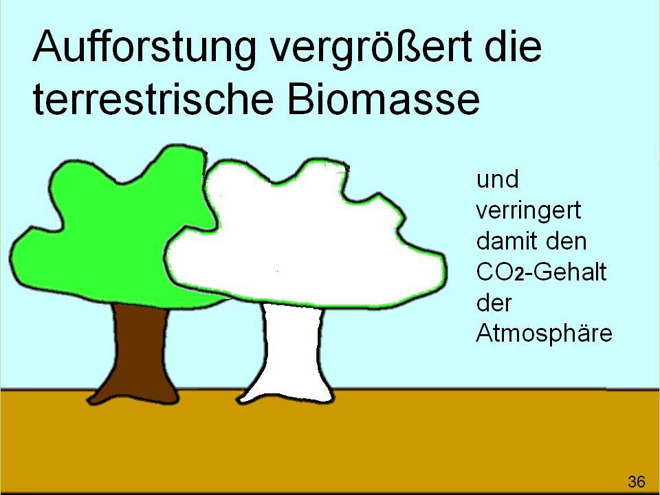 Aufforstung vergrößert die terrestrische Biomasse und verringert damit den CO 2 -Gehalt der Atmosphäre 37