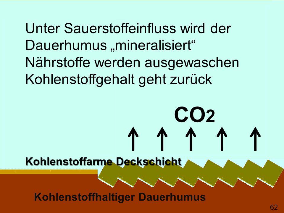Kohlenstoffarme Deckschicht Kohlenstoffhaltiger Dauerhumus Unter Sauerstoffeinfluss wird der Dauerhumus mineralisiert Nährstoffe werden ausgewaschen Kohlenstoffgehalt geht zurück 63