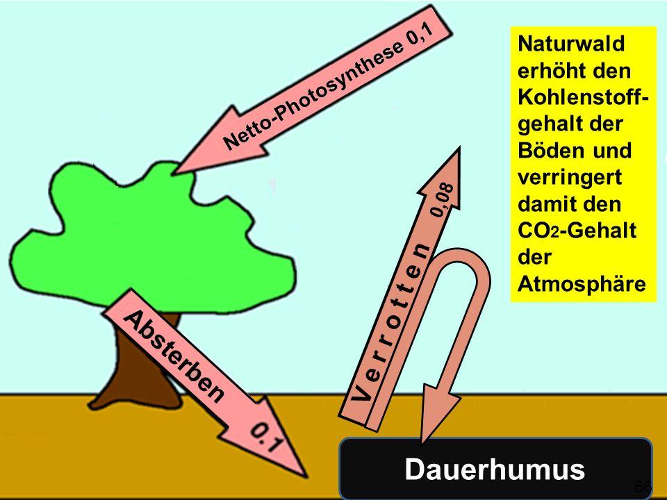 3 Kriterien zur Beurteilung der Klimawirkung von Maßnahmen Wenn die Zahl der Kohlenstoffatome in der Biomasse (lebend oder tot) zunimmt Wenn die Verweildauer der Kohlenstoffatome in der Biomasse (lebend oder tot) zunimmt Wenn die Photosynthese verstärkt oder das Absterben oder das Verrotten verlangsamt wird 67